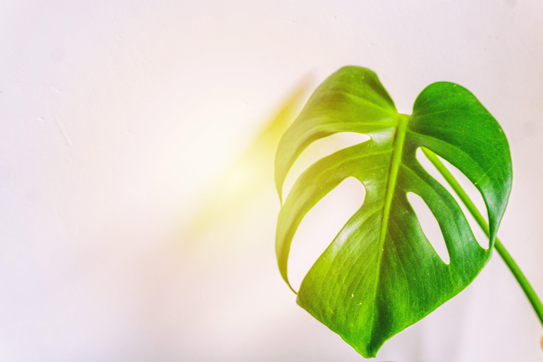 Kostenloses Stock Foto zu pflanze, blatt, grün, wachstum