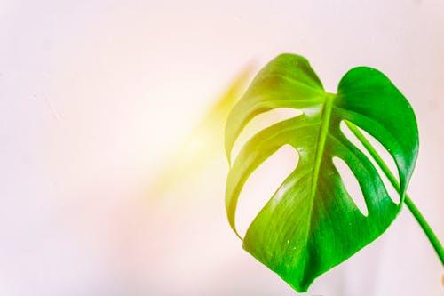Gratis arkivbilde med anlegg, grønn, Stort blad, vekst