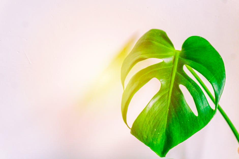 Closeup photo of swiss cheese leaf