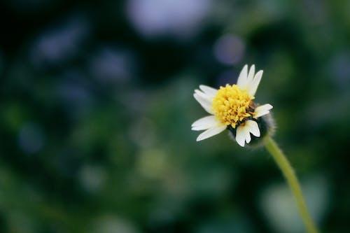 Foto profissional grátis de flor, flor amarela, flor branca, florzinha