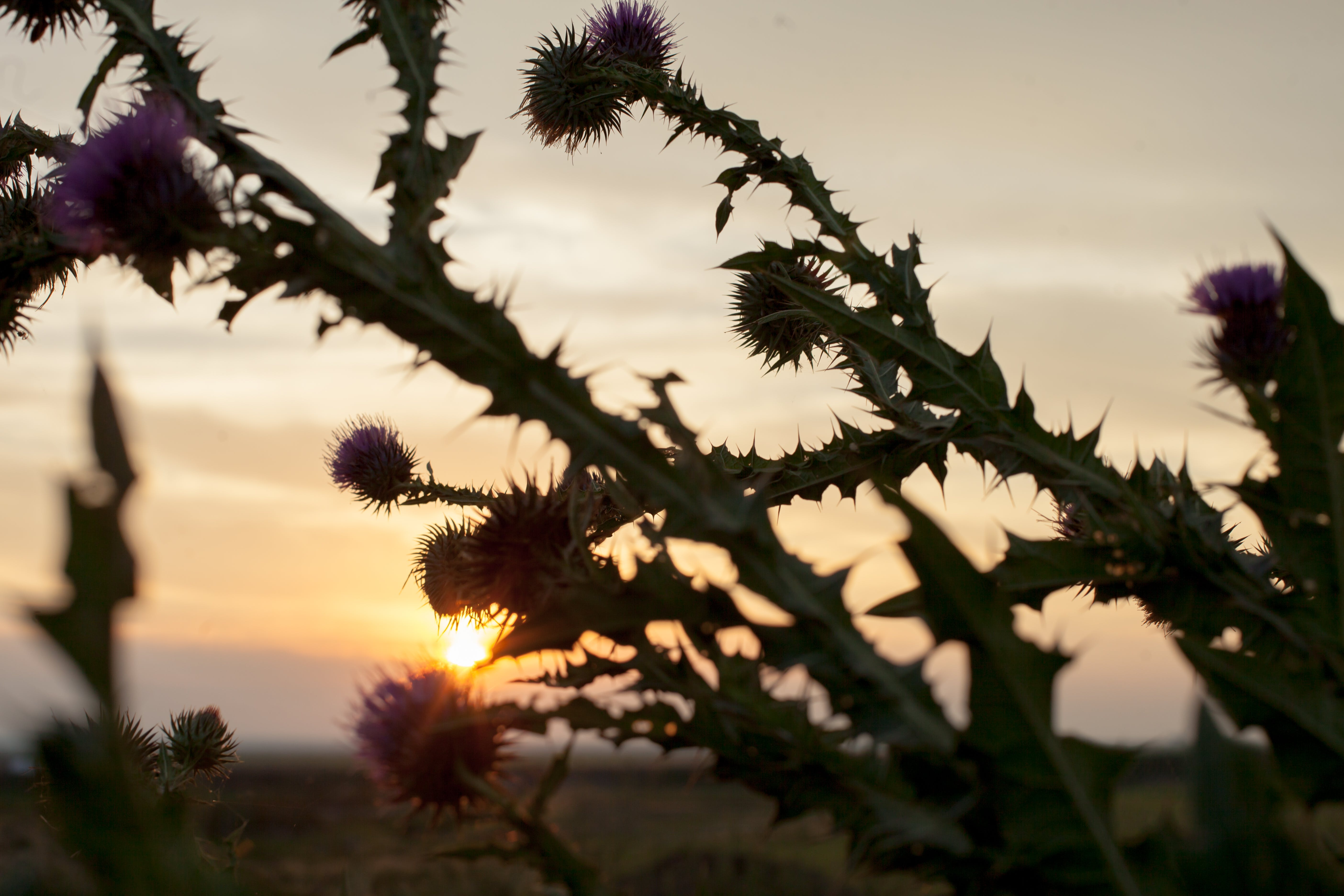 Free stock photo of nature, sunset, flowers, plants