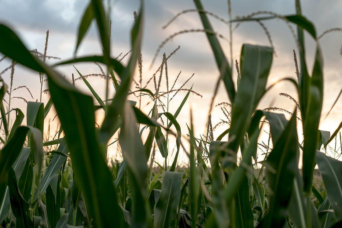 Základová fotografie zdarma na téma denní světlo, farma, hřiště