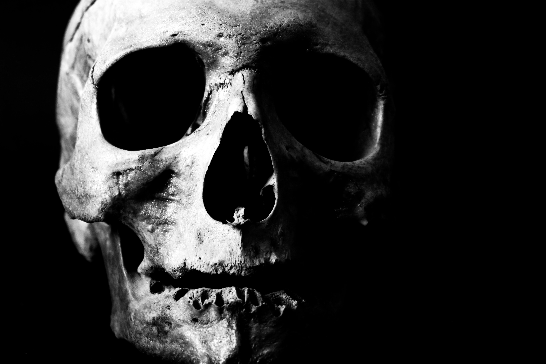 Free stock photo of 4k wallpaper, black and white, black-and-white, Bone