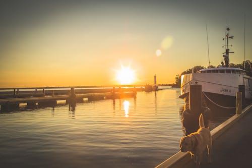 Kostenloses Stock Foto zu boot, dock, docking-bereich, hafen