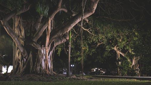 Fotobanka sbezplatnými fotkami na tému džungľa, noc, st georges, tmavo zelená