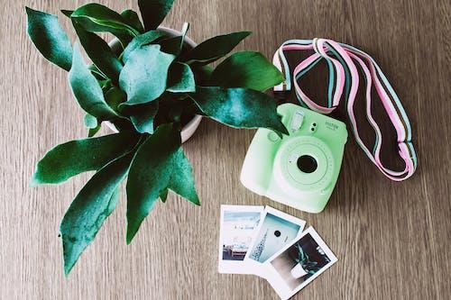 Gratis arkivbilde med farger, flat lay, foto, instantkamera
