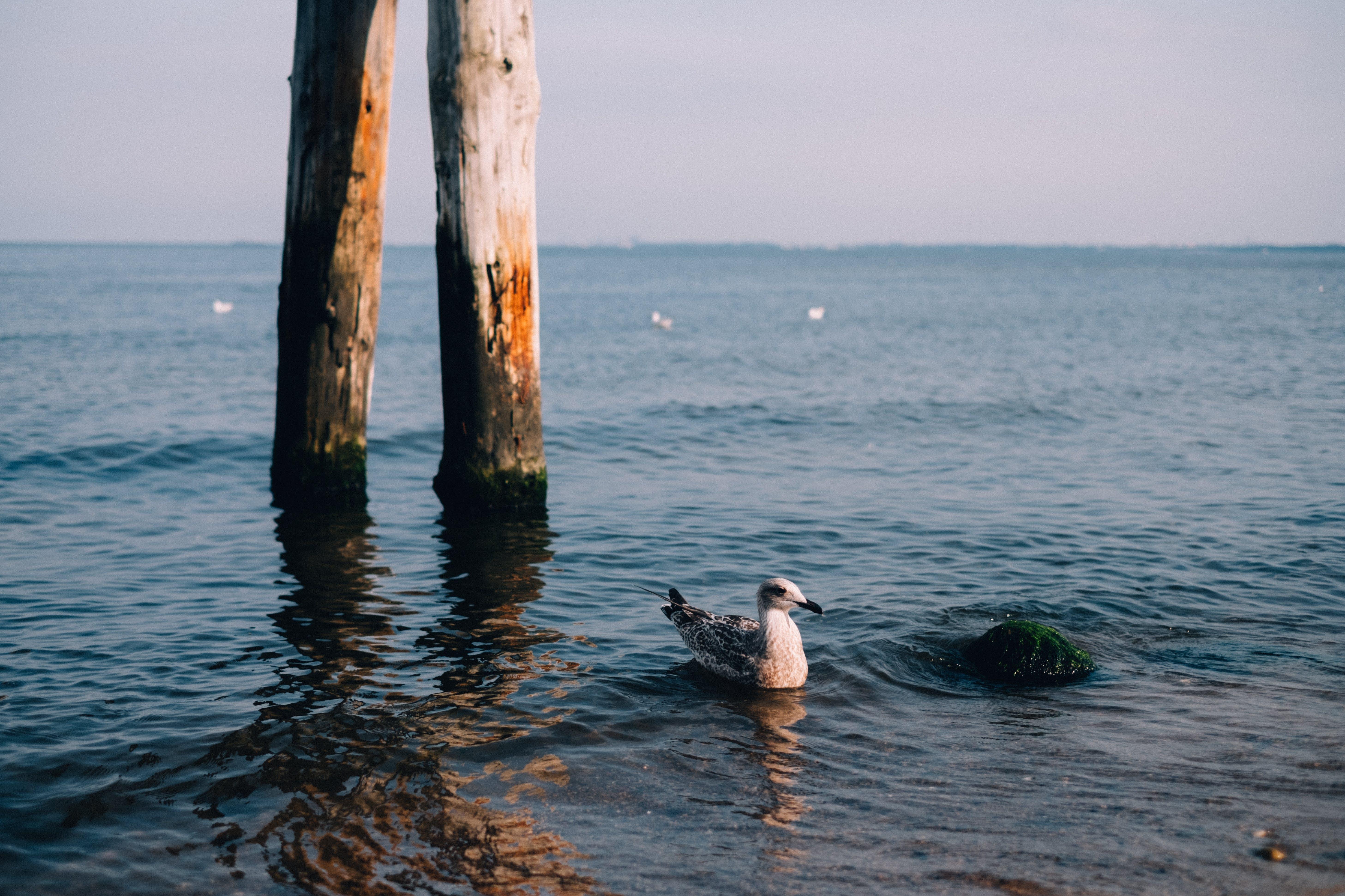 Foto profissional grátis de água, animal, beira-mar, gaivota