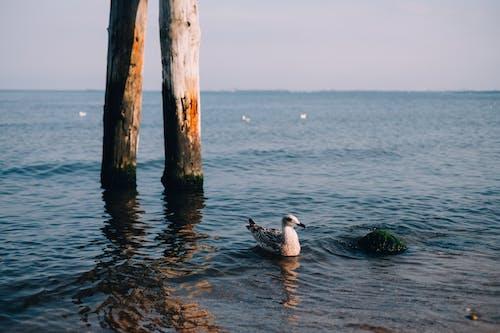 Základová fotografie zdarma na téma denní světlo, dřevo, krajina, léto