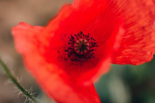 Fotobanka sbezplatnými fotkami na tému detailný záber, farby, flóra, kvet