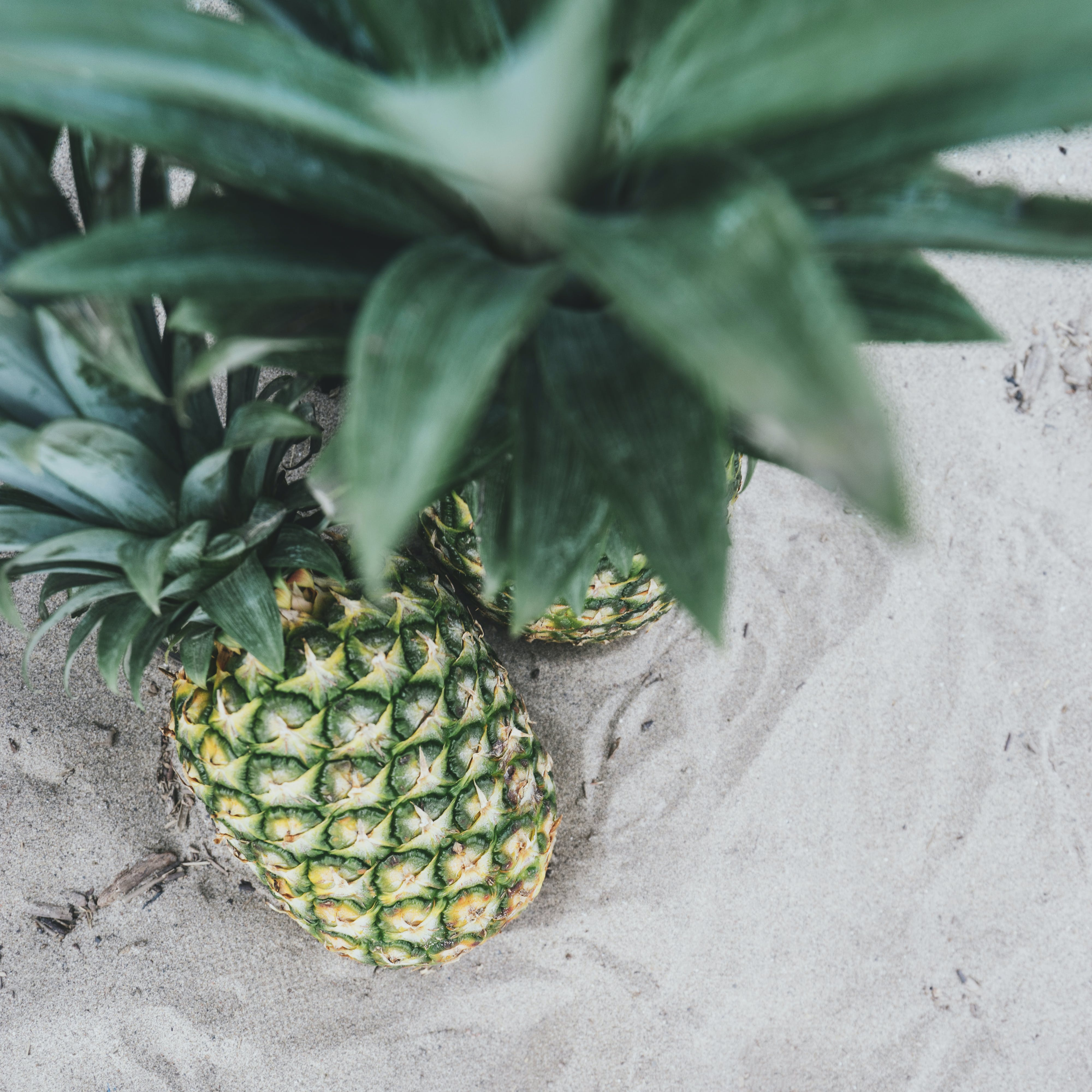 Free stock photo of beach, fruit, looking down, overhead