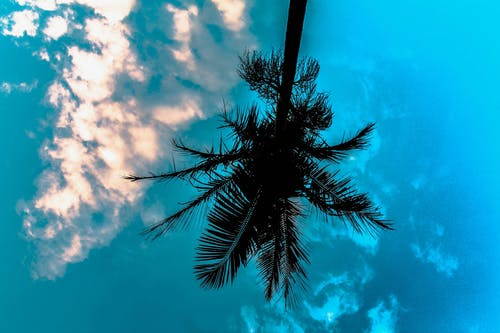 Kostnadsfri bild av blå, blå himmel, moln, palmträd