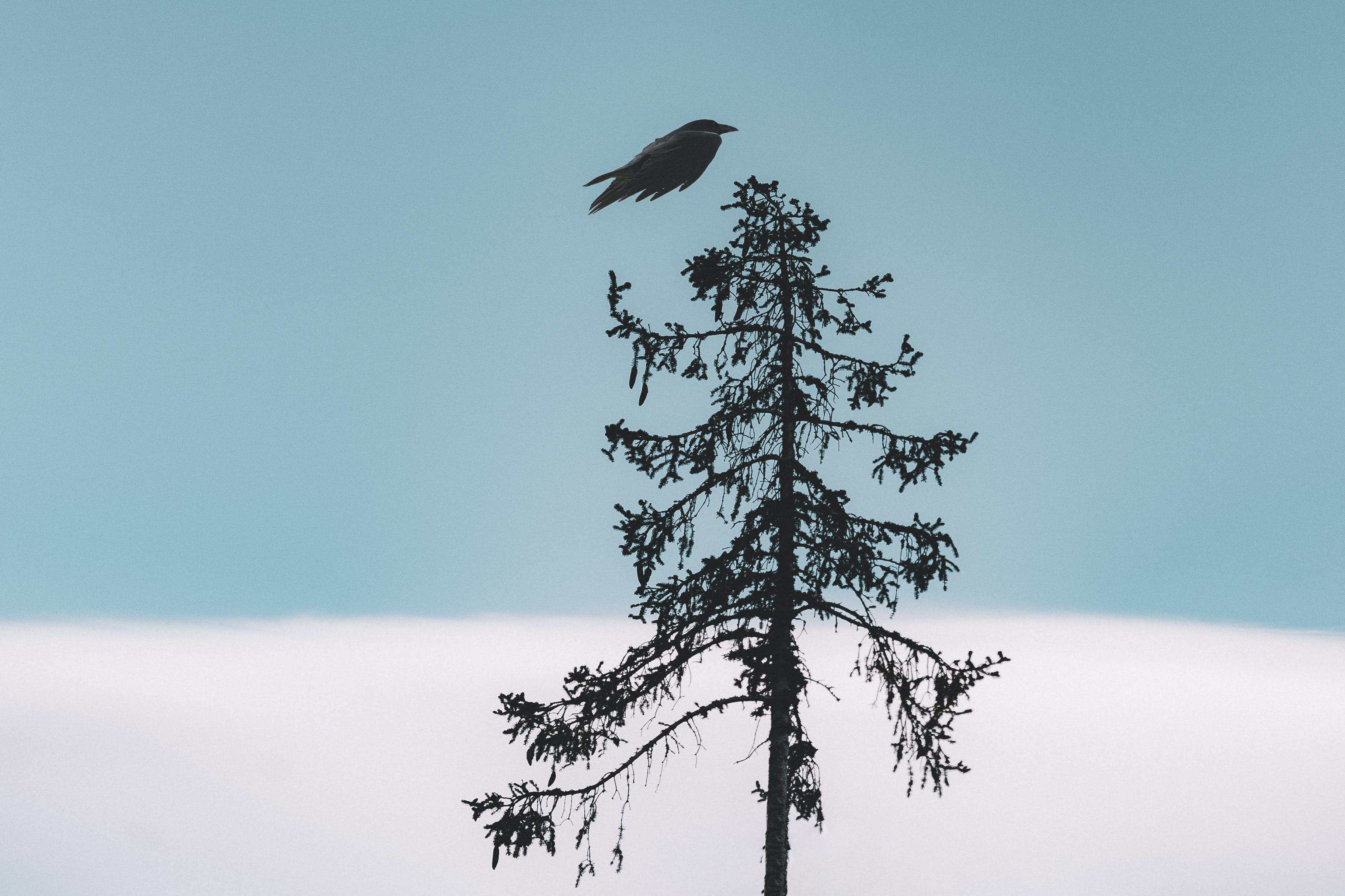 Black Bird Flying Over Tree