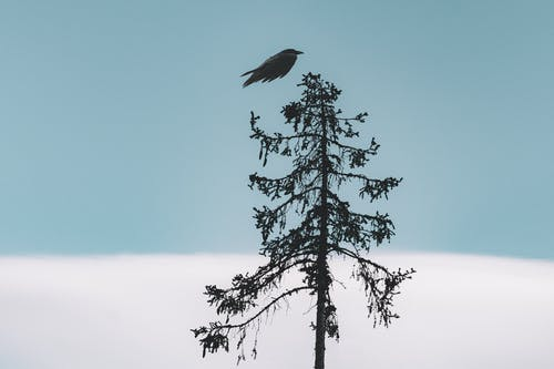 Black Bird Flying Over Tree