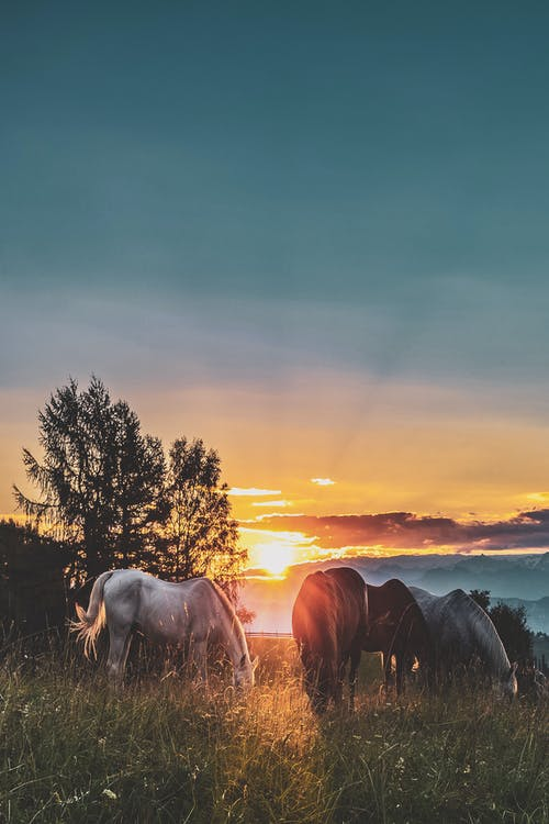 Four Assorted-color Horse on Grass Fields Near Tall Trees during Sunset