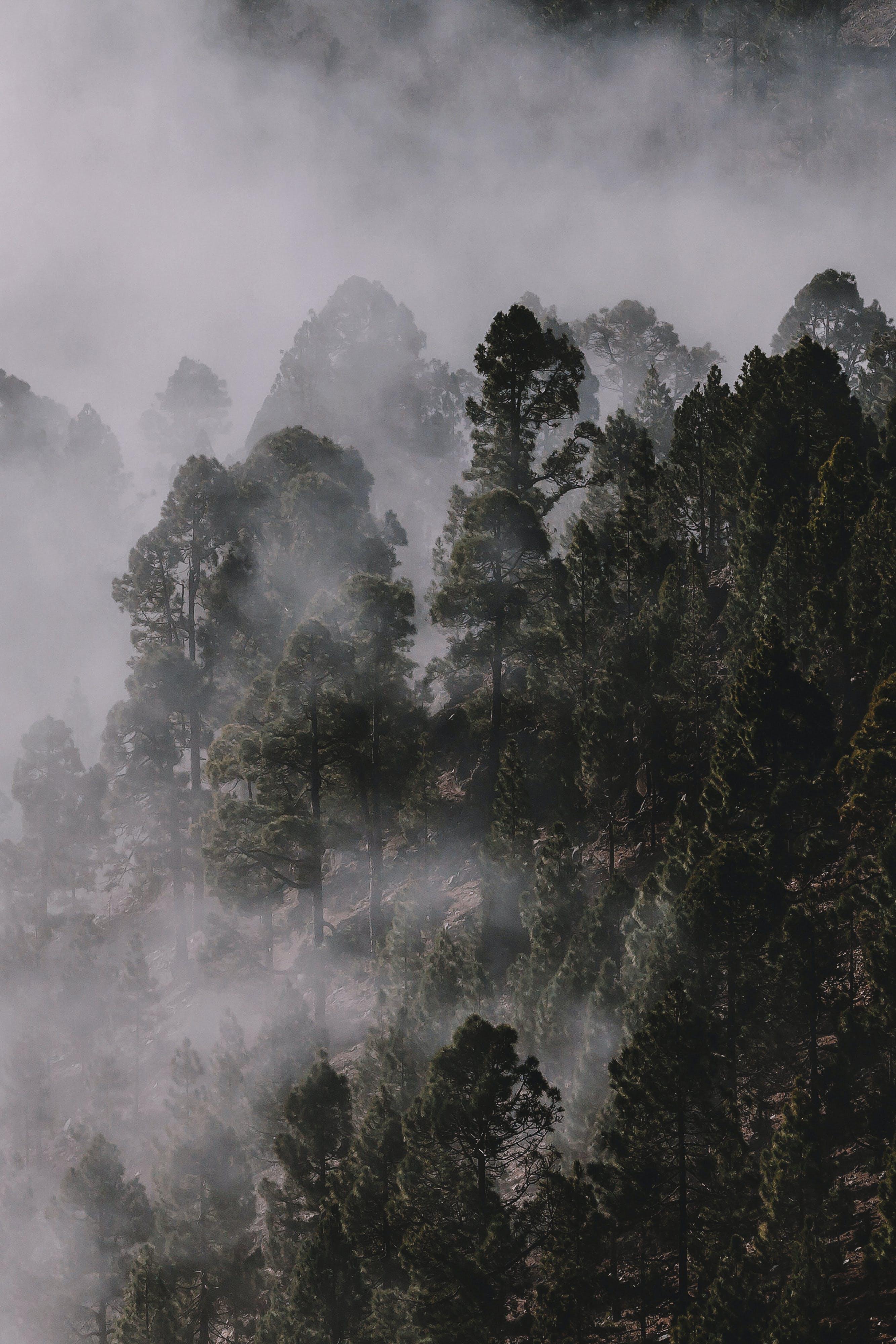 Foto profissional grátis de árvores, enevoado, floresta, garoa