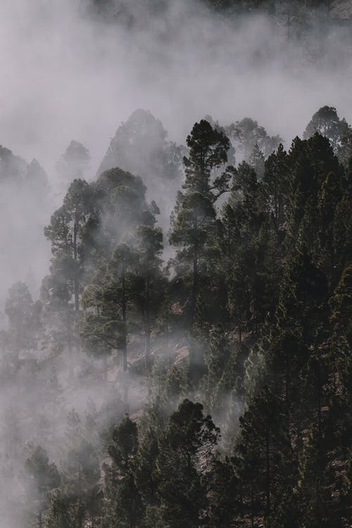 Photo of Forest Covered by Fog