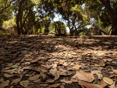 水平面, 落ち葉, 被写界深度の無料の写真素材