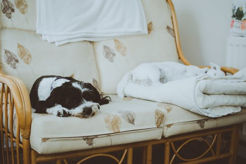 White and Black Dogs Lying on White Loveseat