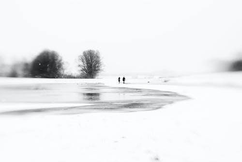 Základová fotografie zdarma na téma černobílá, sníh, surrealistický, zimní krajina