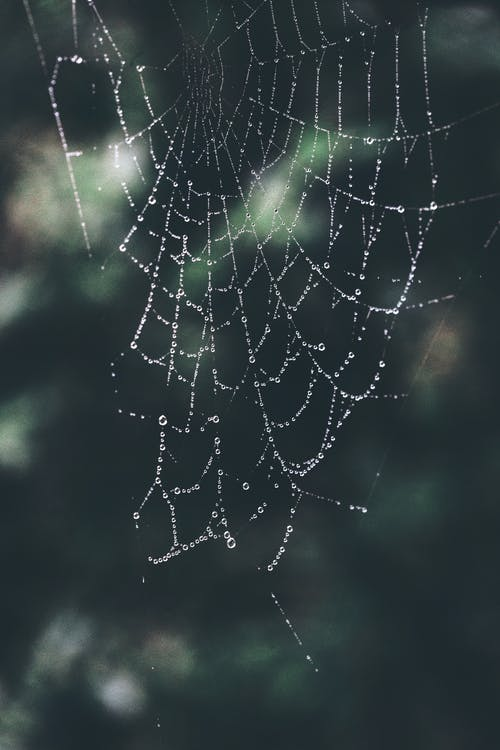 Close-up Photo of Spiderweb