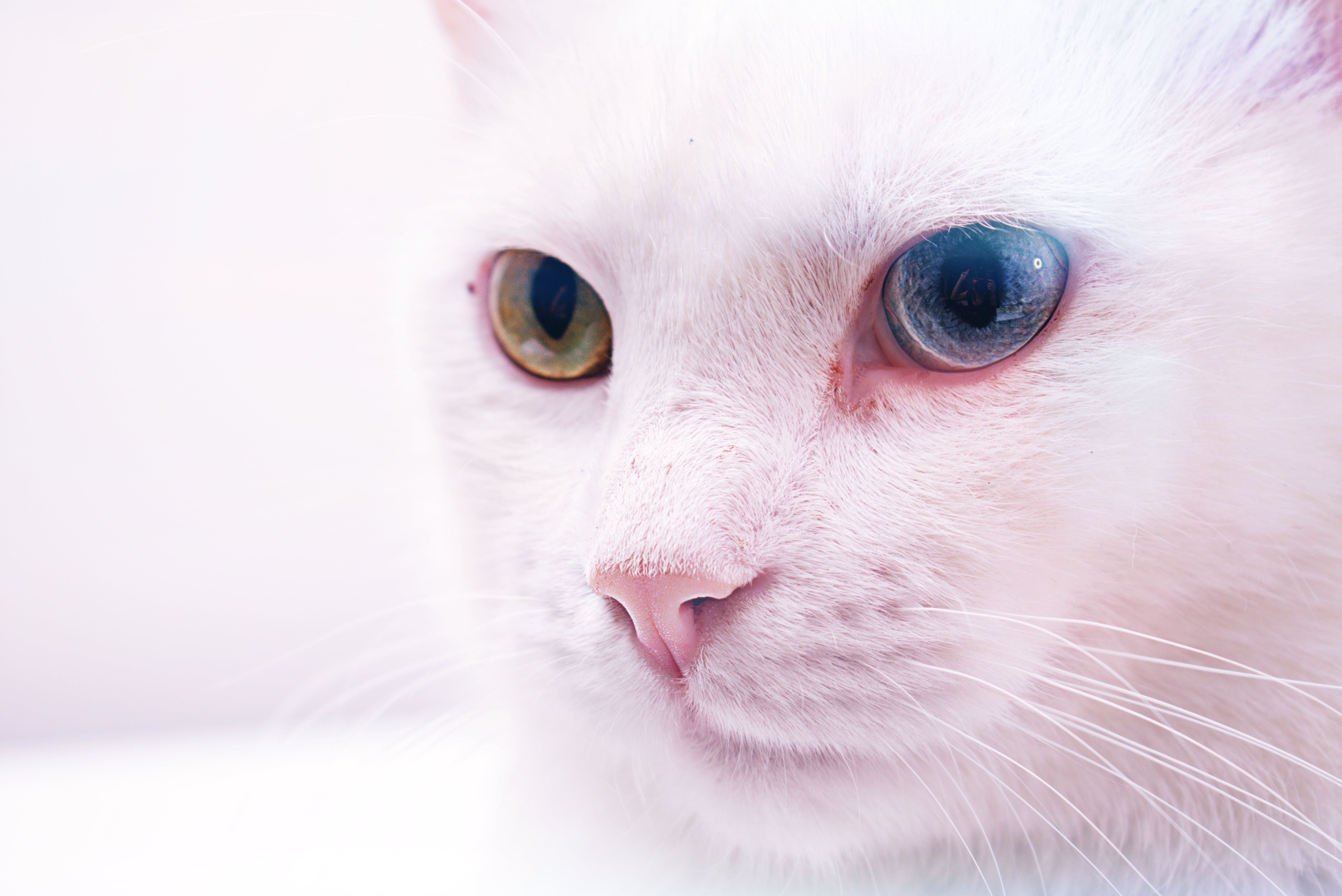 Close-up Photo Of Cat
