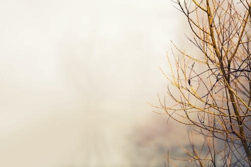 Голое дерево крупным планом