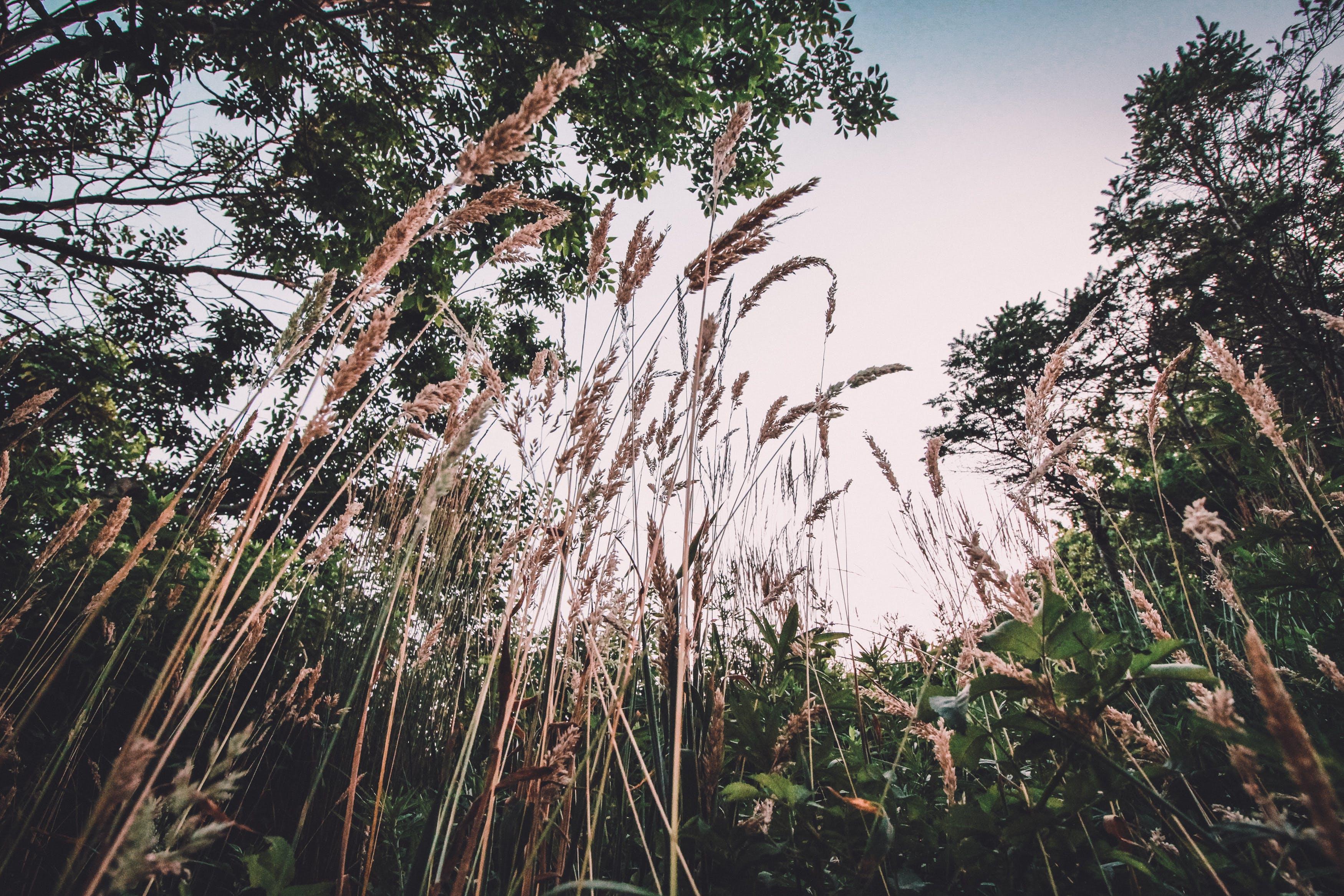 Free stock photo of blades of grass, blue sky, dark green, dark green plants