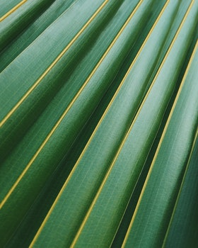Free stock photo of summer, pattern, texture, plant
