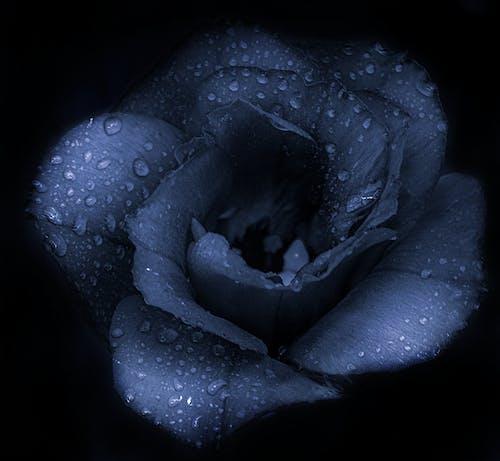 青い花の無料の写真素材