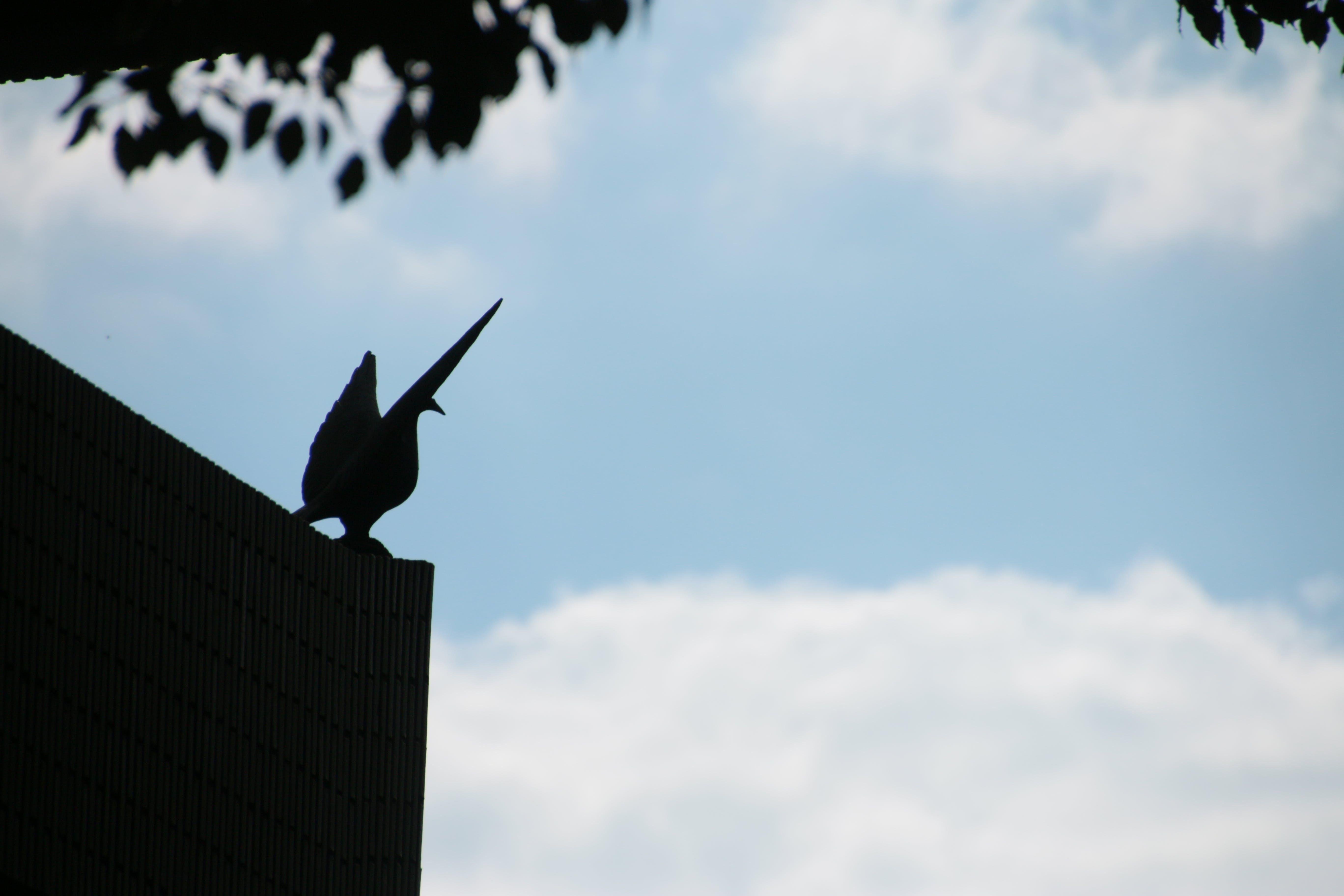 Free stock photo of bird, silhouette, statue