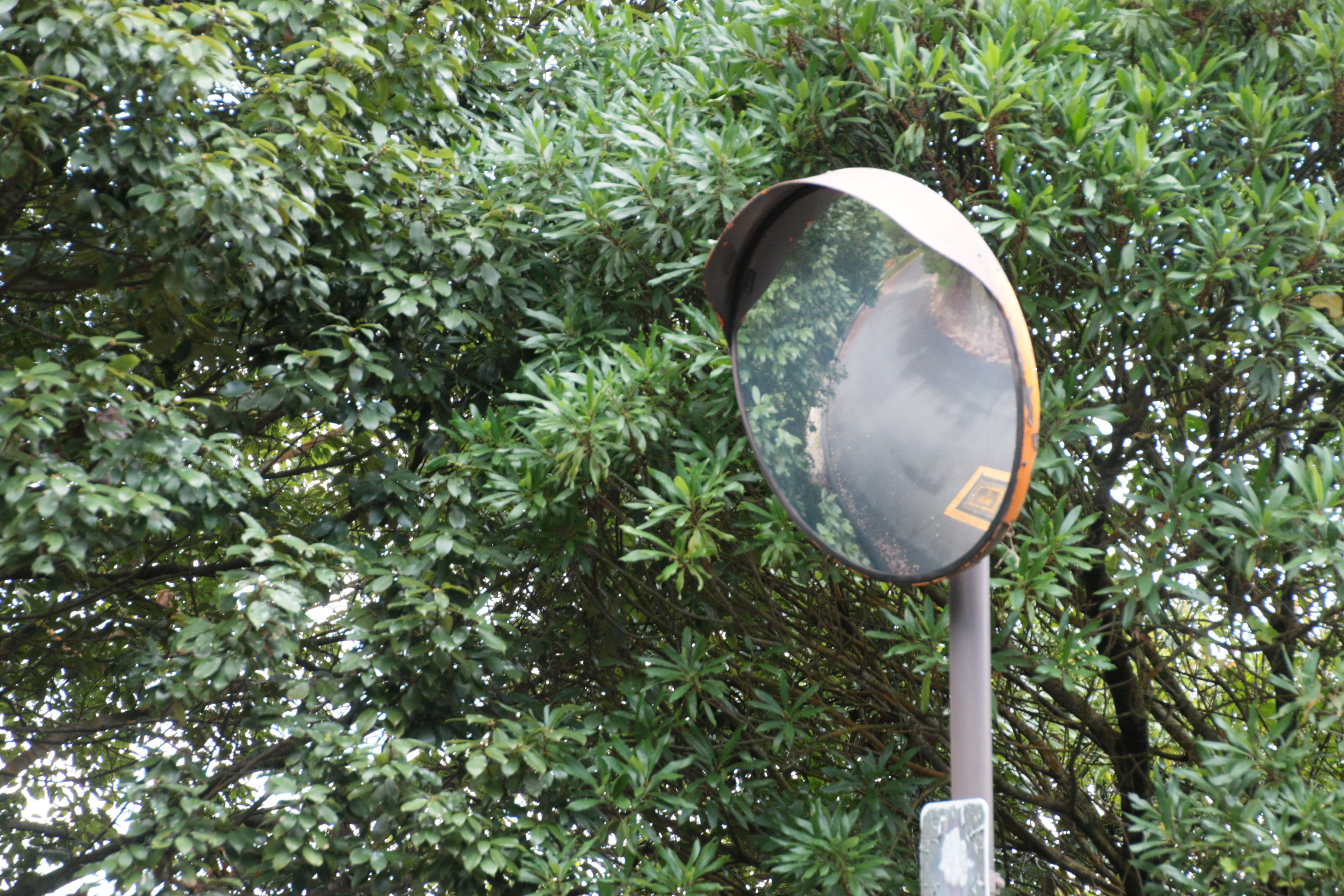 Free stock photo of direction, mirror, path, reflection