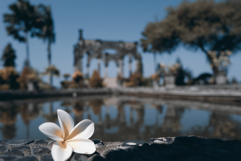 Free stock photo of bali, balinese