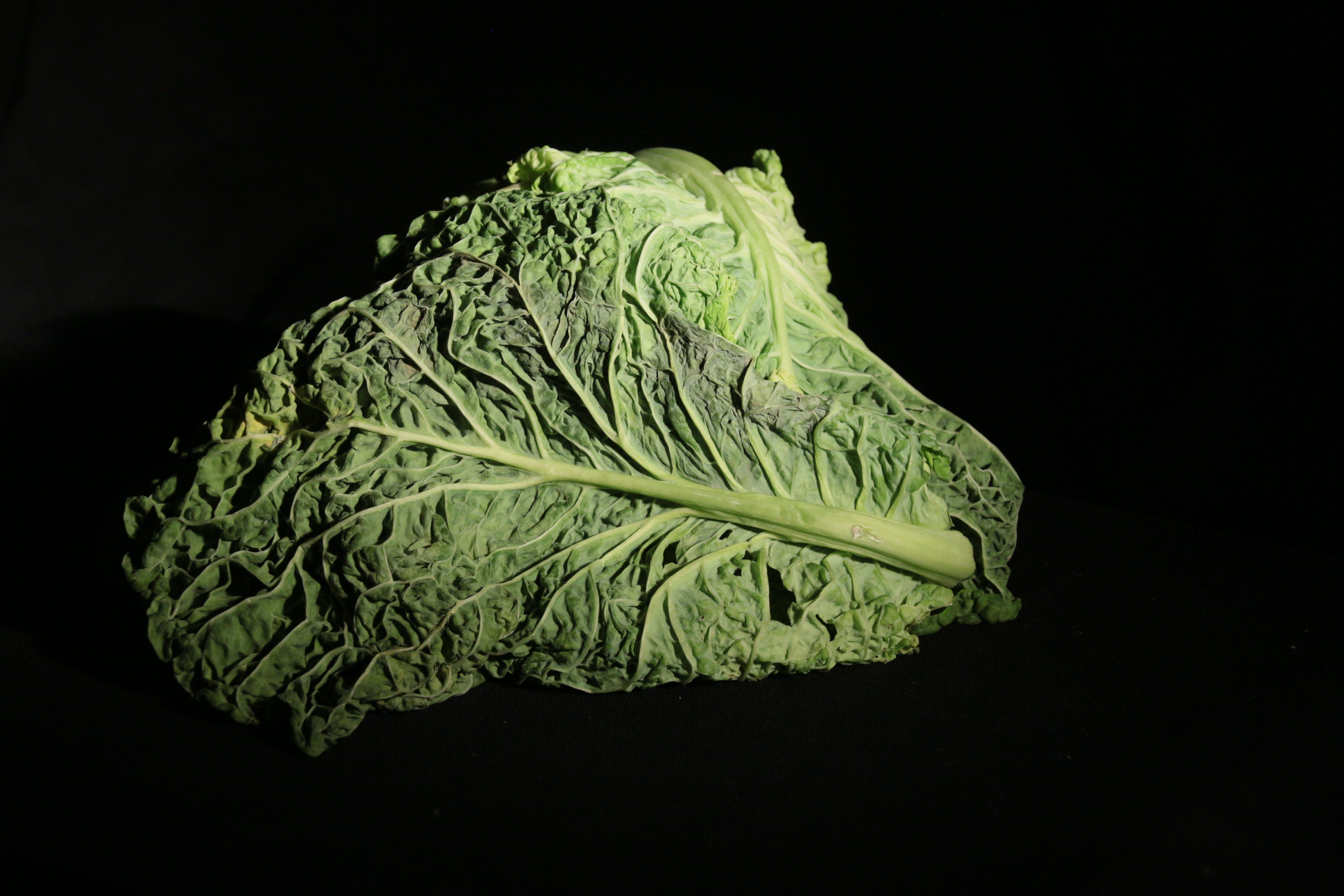 Free stock photo of lettuce, studio