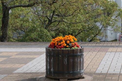 Free stock photo of city, flowers, pot