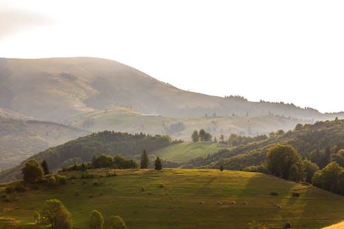 Foto profissional grátis de alvorecer, cênico, colina, enevoado