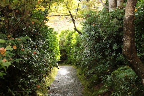 Free stock photo of garden, path