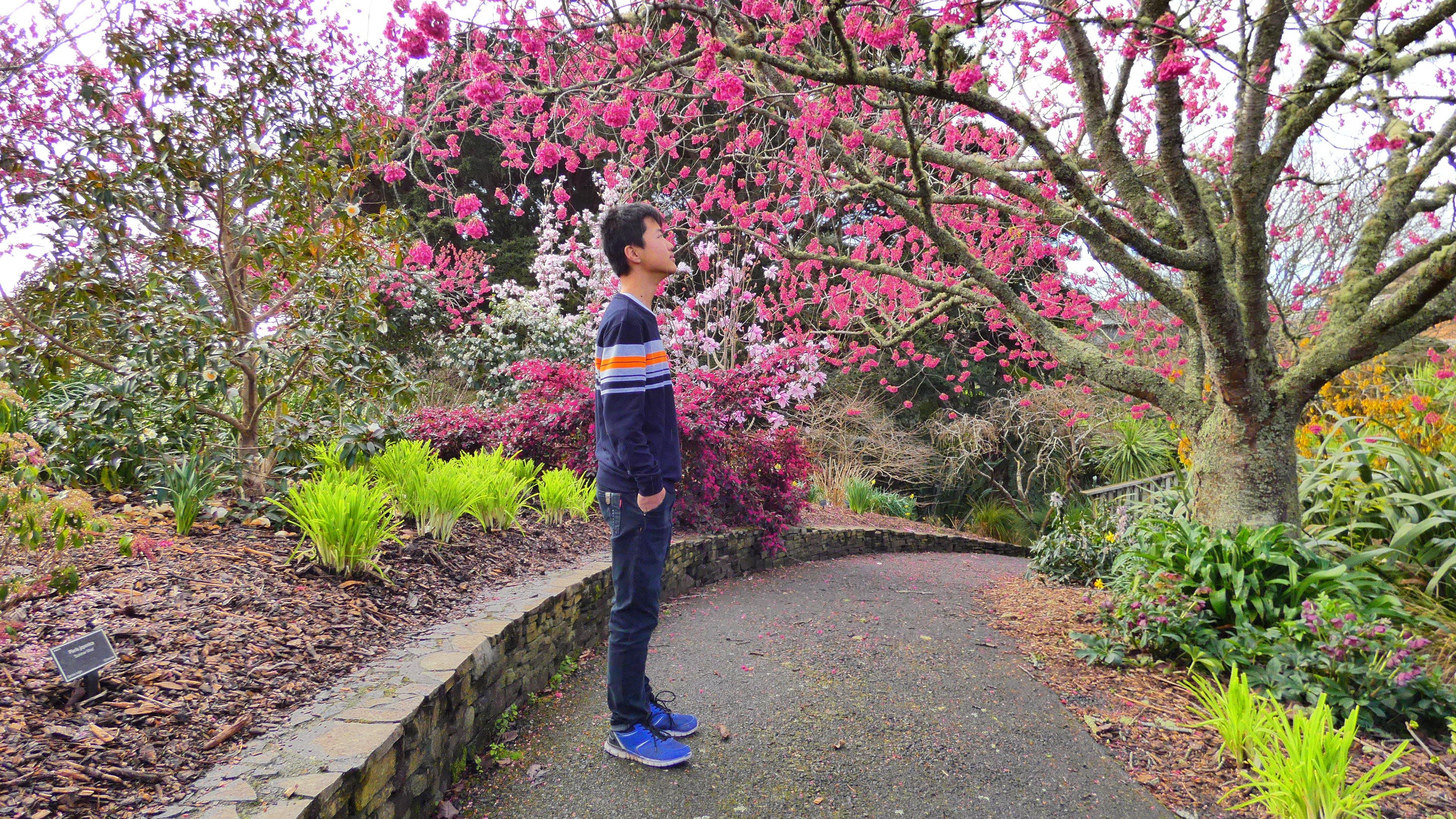 Free stock photo of bird, botanical garden, cherry blossom, spring flower