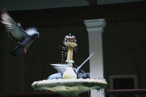 Ảnh lưu trữ miễn phí về chim, Đài phun nước, Nước