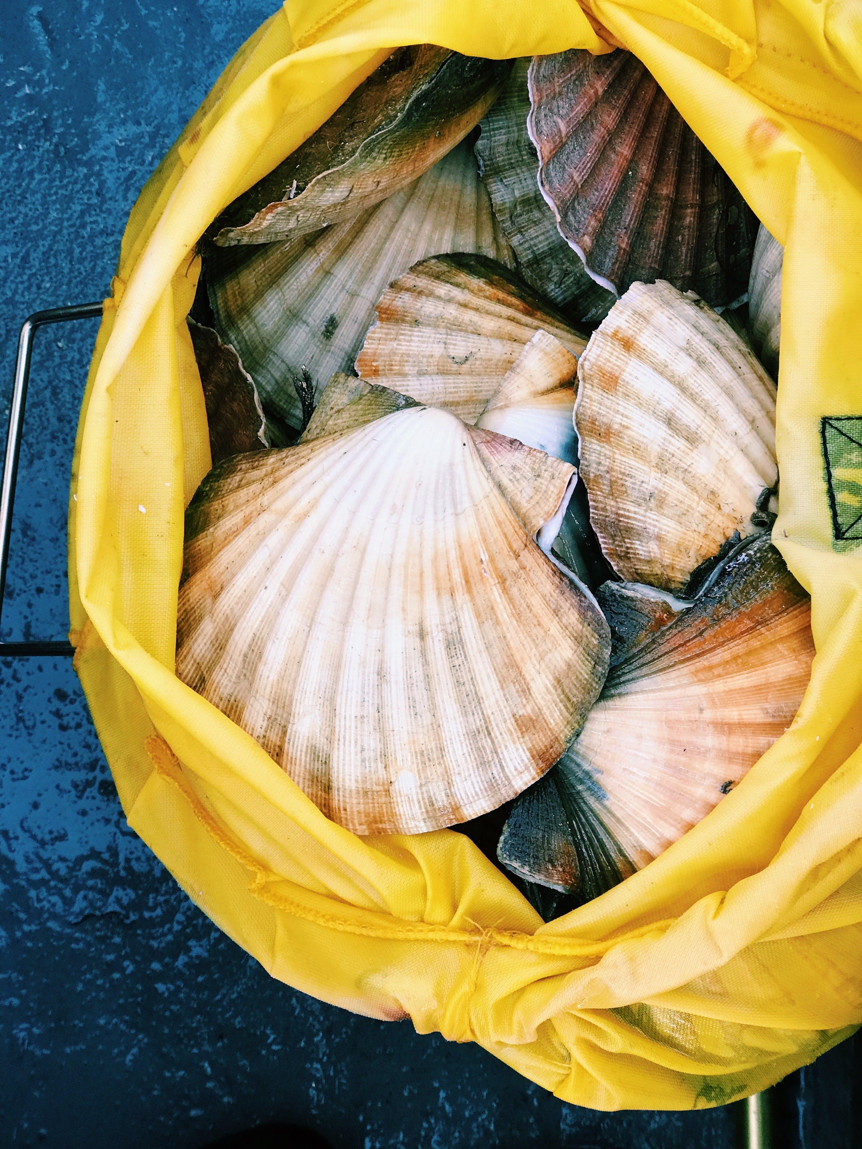 Kostenloses Stock Foto zu jakobsmuschel, meeresfrüchte, muscheln, schaltier
