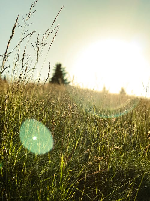 乾草地, 光, 夏天, 天性 的 免費圖庫相片