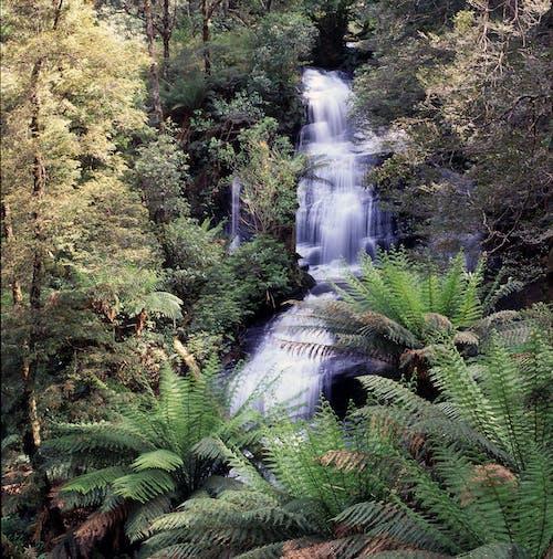 Free stock photo of green fern, landscape, rainforest, waterfall