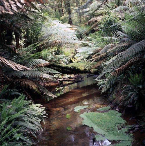 Free stock photo of australian, fern leaves, landscape, moss