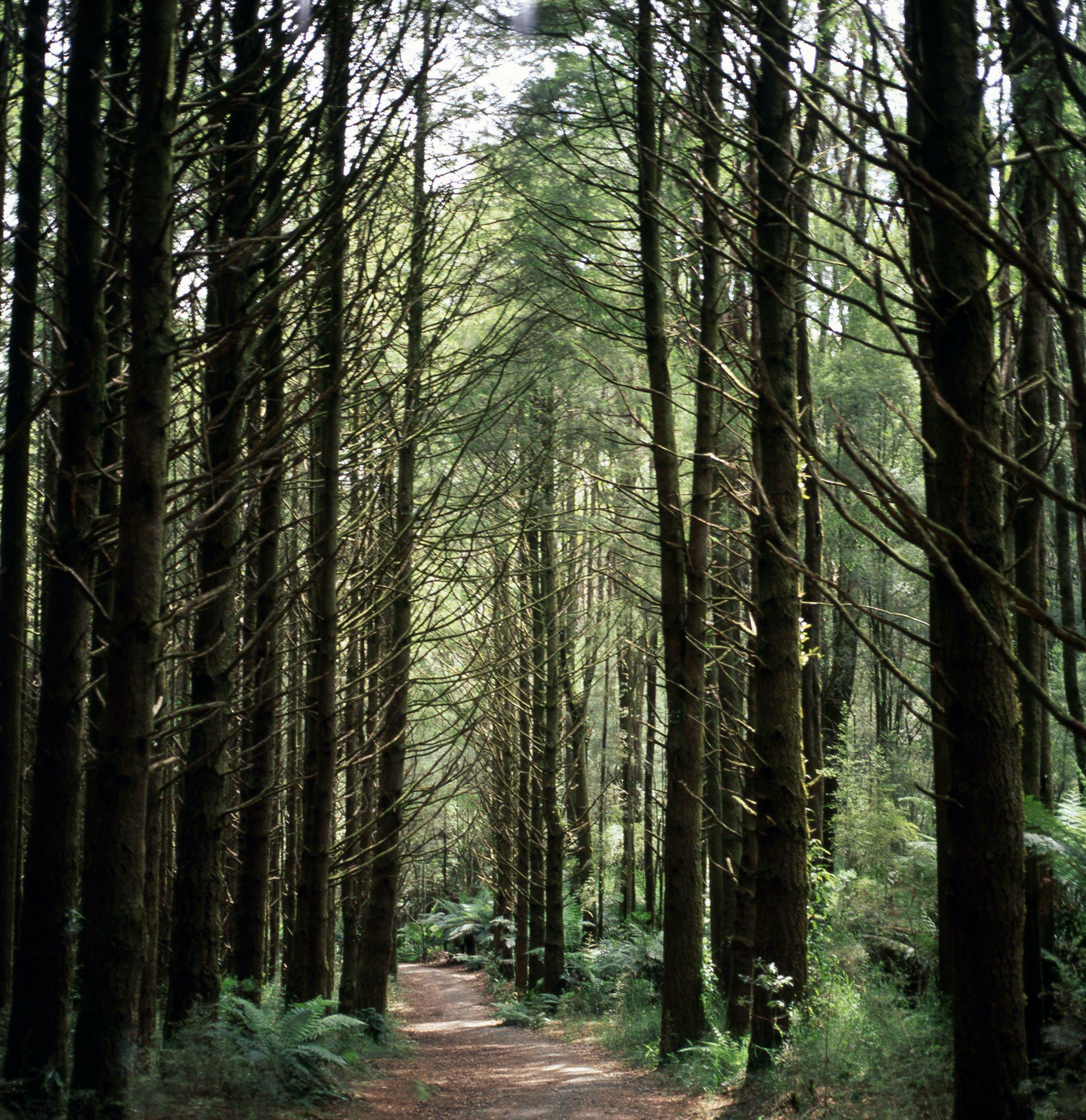 Photos gratuites de arbres, branches, centrales, environnement
