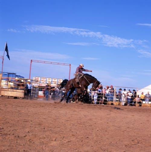 Free stock photo of buck, horseback riding, horseman, rodeo