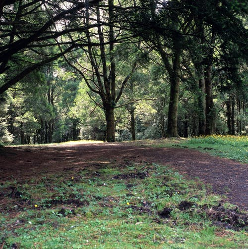 Free stock photo of country lane, nature trail
