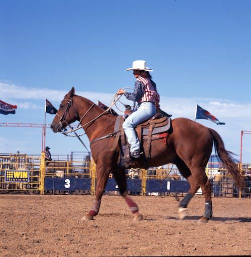 Free stock photo of horseback riding, rodeo