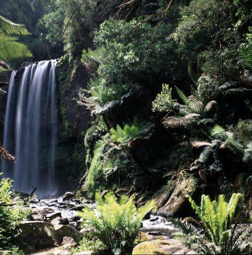 Free stock photo of green fern, rainforest, waterfall