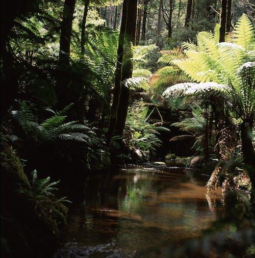 Free stock photo of fern leaves, rainforest