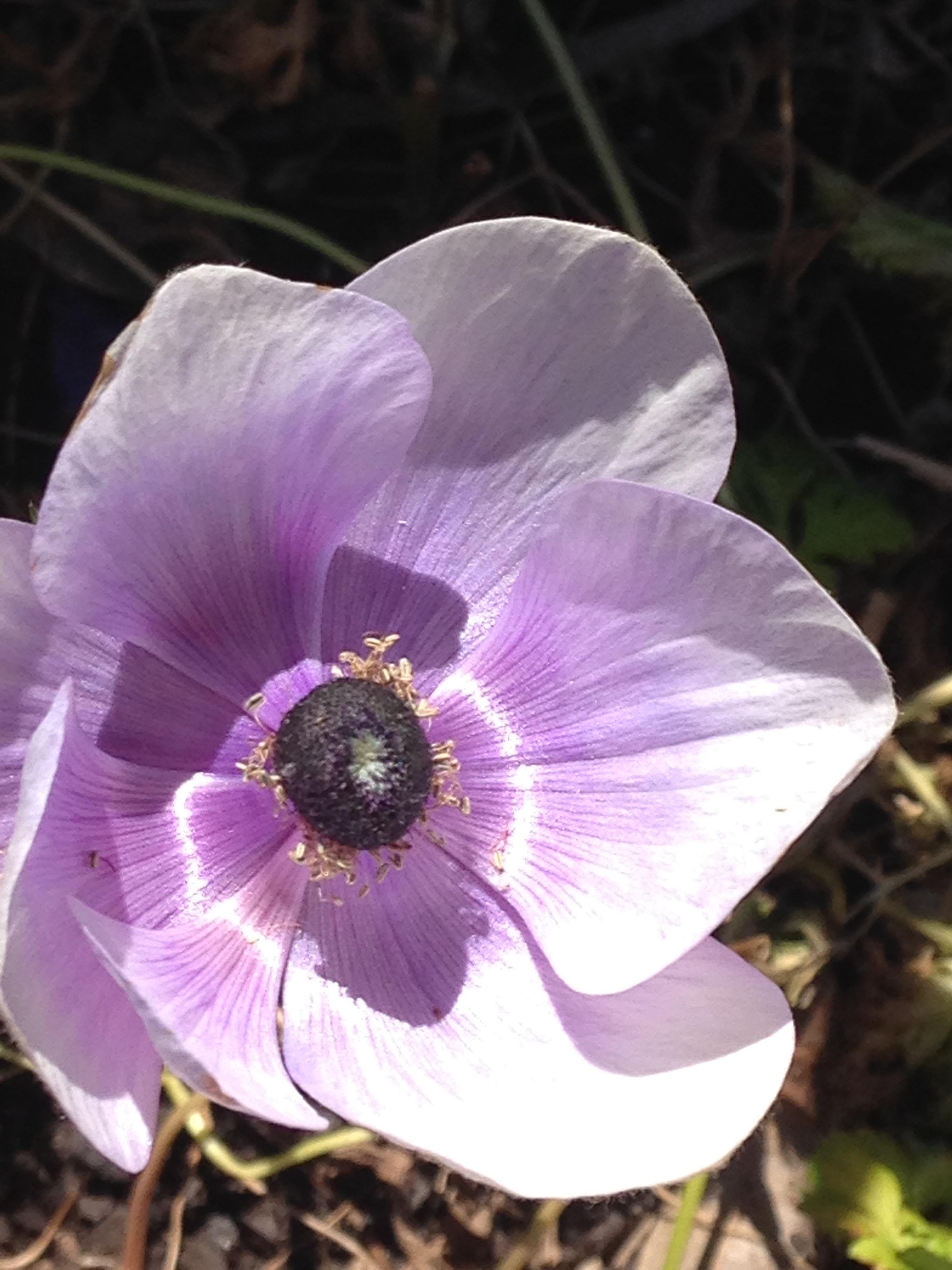 Free Stock Photo Of Flower Light Purple Purple Flowers