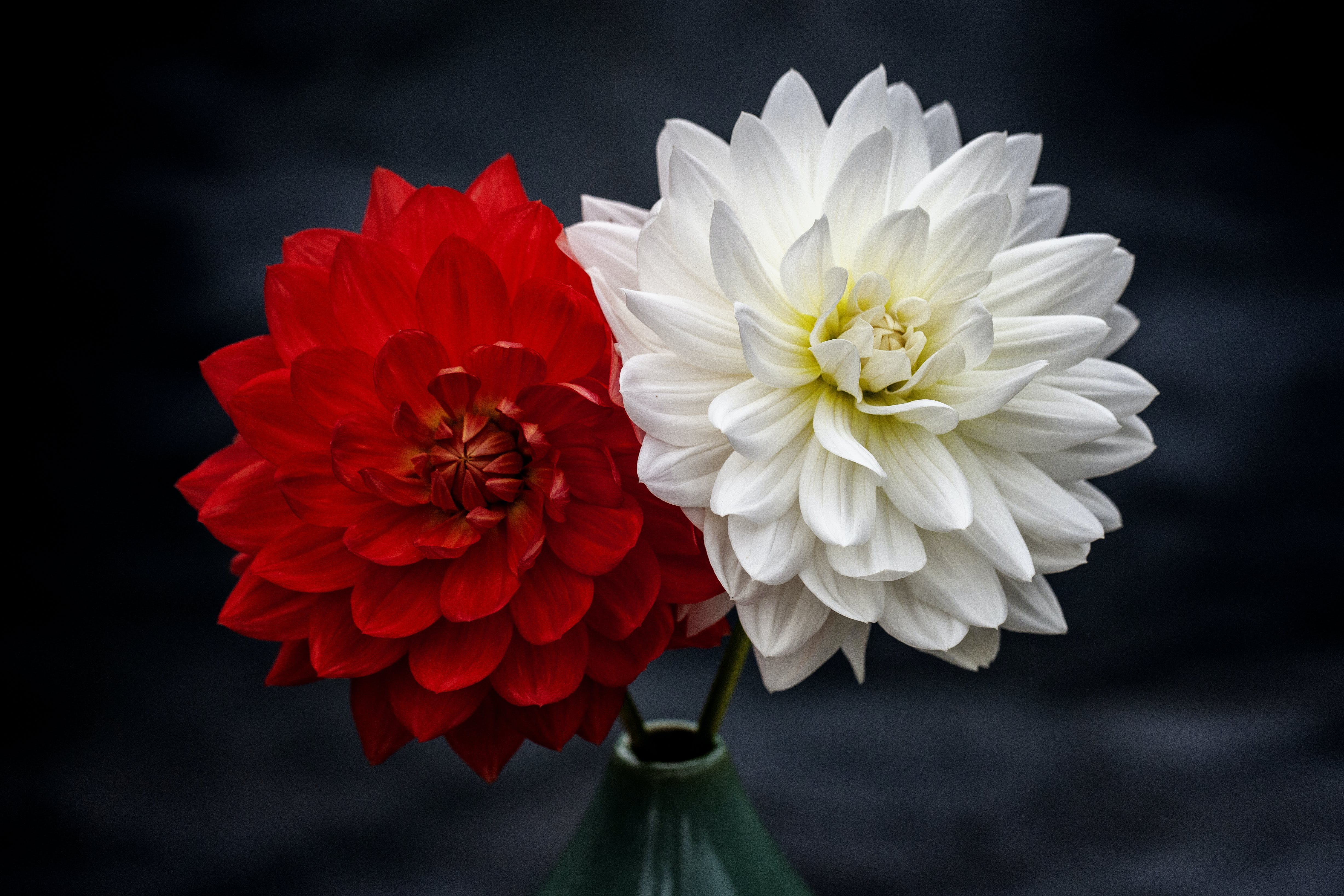 Photo of Red and White Petaled Flowers